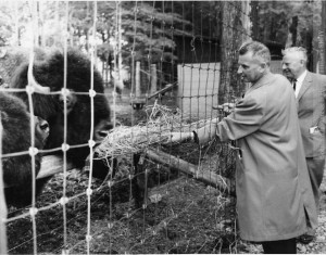 Bisons du Zoo de Granby