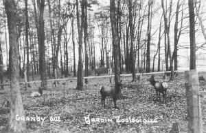 Cerfs du zoo de Granby