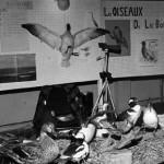 Exposition du Club Natural à l'Escale, au printemps 1976.