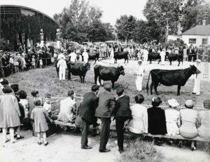 Ferme-école provinciale de Deschambeault. Pique-nique annuel des éleveurs de bovins canadiens. (Fonds Société des éleveurs de bovins canadiens, SHHY. Photo : Office provinciale de publicité, Québec, P025-S001-D001-P010)
